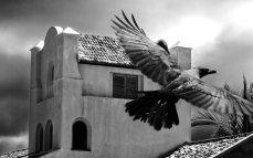 Raven-HD-wallpaper