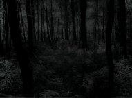 dark-forest_00223493