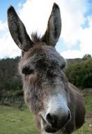 donkey-206x300